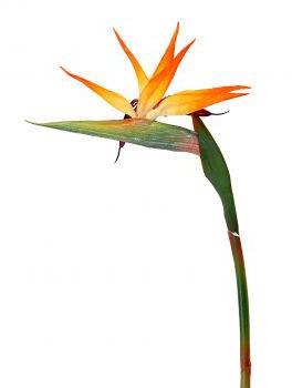 FIORI bouquet STERLIZIA - Daniele Panareo fotografo Lecce