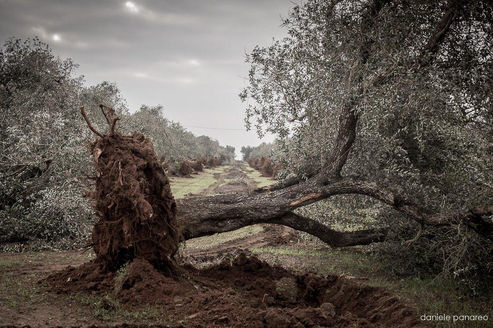 Project Potenza - Daniele Panareo Fotografo Matrimonio Lecce-7