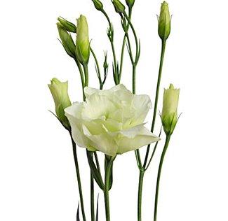i fiori del bouquet lisianthus bianco - Daniele Panareo fotografo di matrimoni a Lecce e provincia