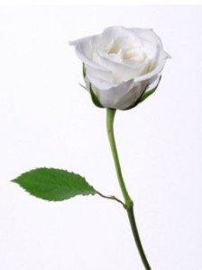 i fiori del bouquet rosa BIANCA - Daniele Panareo fotografo di matrimoni a Lecce e provincia