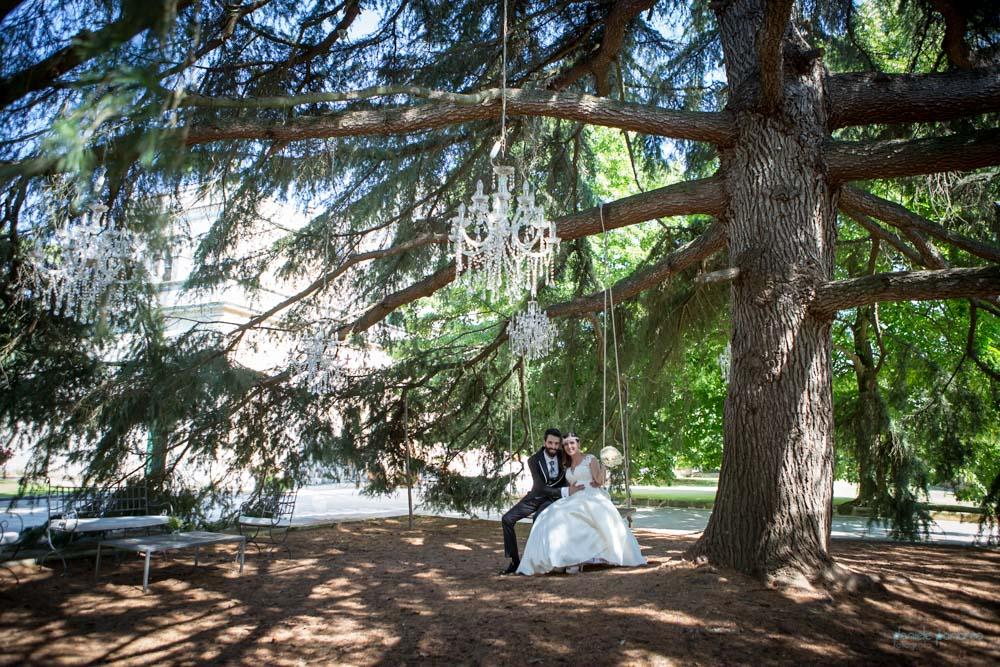 sposarsi nel Salento_Tenuta Lucagiovanni_albero cedro imponente